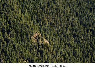 High Elevation Pine Forests at Olympic National Park