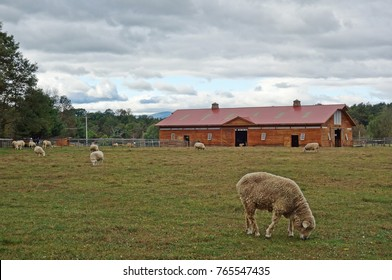 HIGH FALLS, NY -30 SEP 2017- View of the Woodstock Farm Sanctuary, a rescue sanctuary for farm animals near Woodstock in upstate New York state.