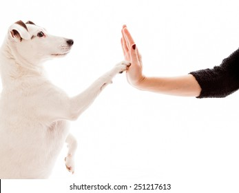 High Five between a dog and a woman