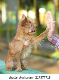 High five between the man and his dog