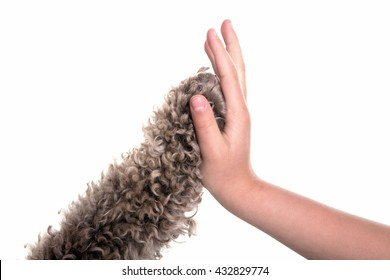 high five dog and girl in studio with white backdrop