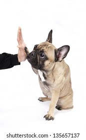 high five with french bulldog