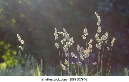 High grass on a summer green meadow filled with light