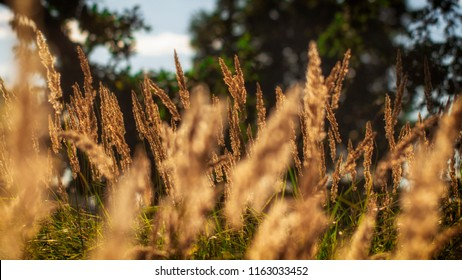 High grass on a summer green meadow filled with light close up