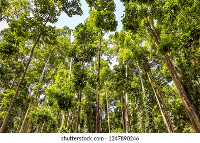 High green trees of Monky Forest on Bali island, Indonesia