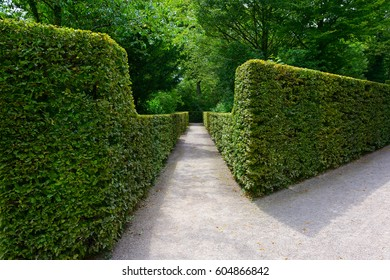 High hedges in the city park in Germany.