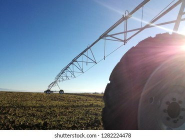 High irrigation system for field planted with grain. Green shoots of wheat growing up to the sunny horizon. Pivot Sprinkler irrigation system in the agricultural industry.
