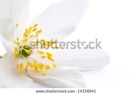 High Key Shot White Flower Yellow Stock Photo Edit Now 14358841