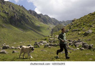 HIGH LAND on BLACK SEA REGION, TURKEY. 24 JULY 2015. Shepherd and Kangal (Herding dog). The Kangal dog is a breed of large livestock guardian dog originating from the Sivas province of Turkey.