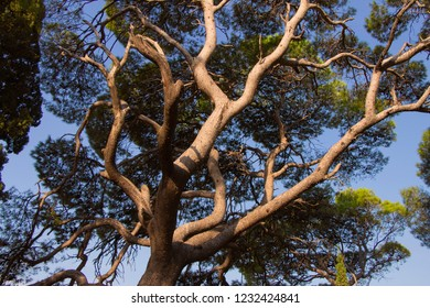 High mediterranean trees in park
