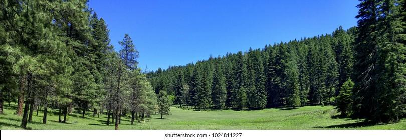 High Mountain Glade