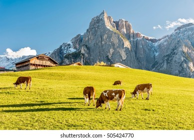 high mountain pastures in autumn with rocky mountains with snow and colorful trees plateau of Siusi Alps in Trentino Alto Adige Italy