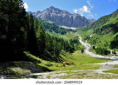 High mountain pastures in the Obertilliach valley below Cima Palombino on the Italian-Austrian border