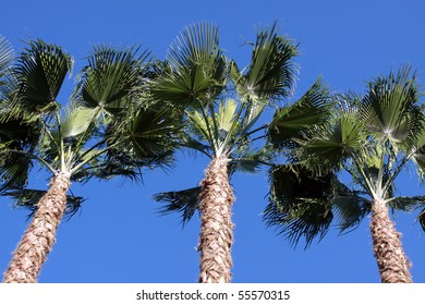 High Palm trees against the blue sky