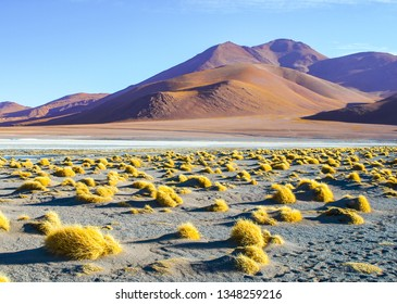 High peaks and typical grass clumps at Laguna Colorada in southern bolivian Altiplano