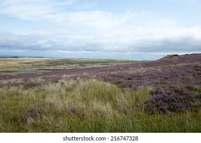 High plain with heather