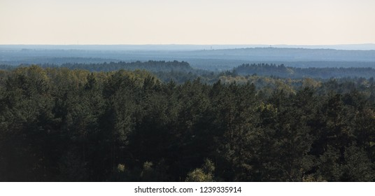 High point view of vast forest