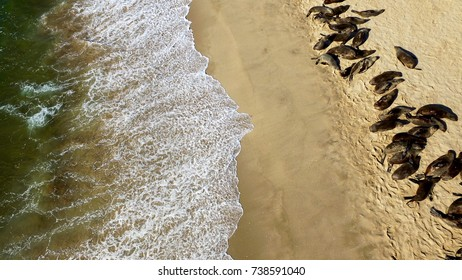 High quality aerial drone photo of desert sand peninsula, ocean shore and seals on beach near Walvis Bay lagoon with view of distant sea horizons at Namibia's Atlantic west coast, southern Africa