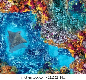 High quality image with a stingray. Underwater world. View from above