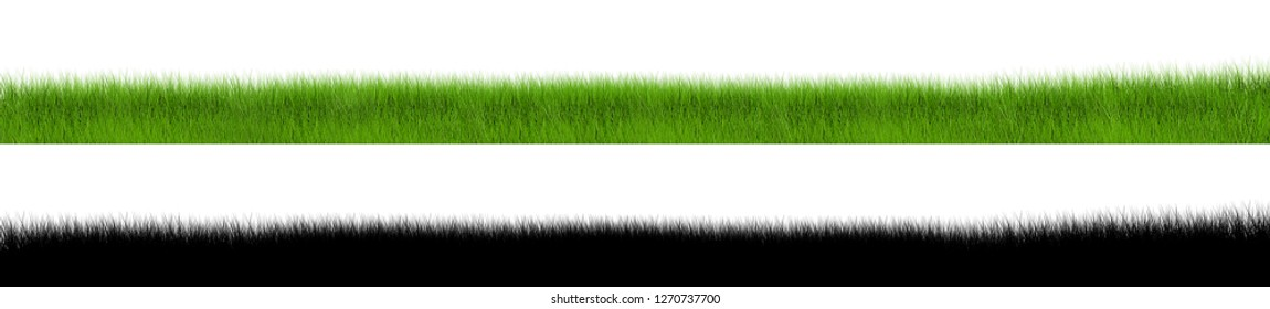 High quality isolated green grass on white background. This grass image easy using with mask.
