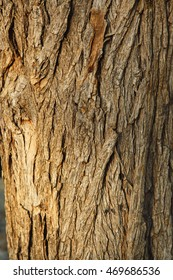 high resolution background texture of natural bark wood