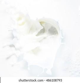 High resolution beautiful splash of fresh milk. White background. Texture.