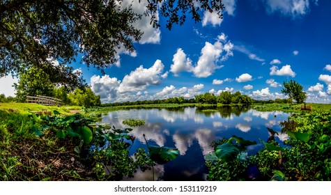 A High Resolution, Colorful, Panoramic Shot of Beautiful 40-Acre Lake with Summer Yellow Lotus Lilies, Blue Skies, White Clouds, and Green Foliage at Brazos Bend State Park, Texas.