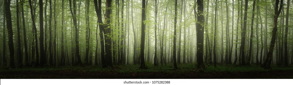 high resolution forest panorama
