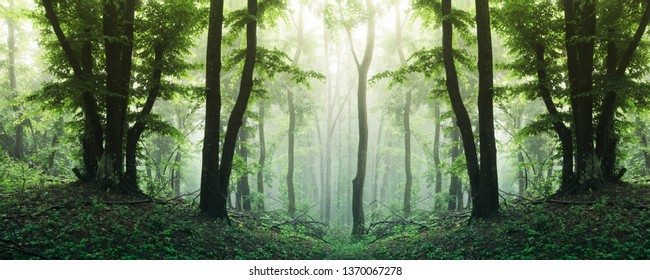 high resolution forest panorama, sunny green woods landscape
