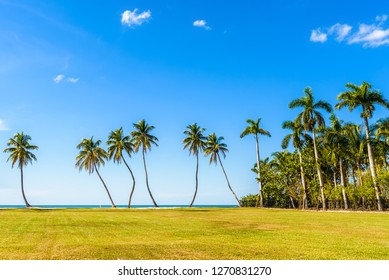 High resolution HD tropical landscape with tall palms, blue sky, ocean and grass. Naples, Florida.