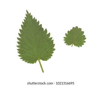 High resolution leaf texture scan