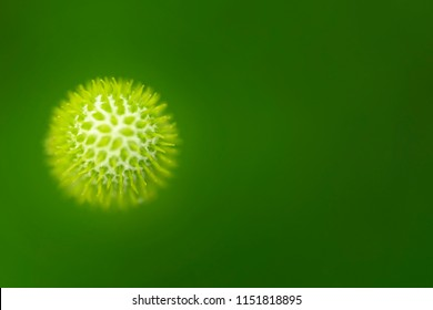 High resolution macro image of Virus. Close-up image of an organic cell on green background. A xray of bio element like a virus.