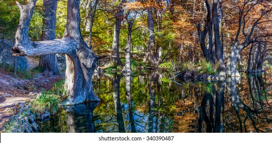 High Resolution Panoramic View of Giant Cypress Trees with Beautiful Fall Foliage Reflecting in the Clear Waters of the Frio River.