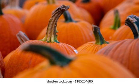 High resolution photo of a group of pumpkins on a cart waiting to be sold. Beautiful photo for a fall themed graphic, potentially based around Halloween, Thanksgiving, or even a sort of Fall Festival.