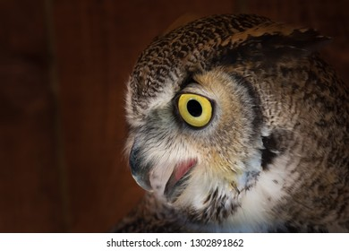 High resolution photo of an owl