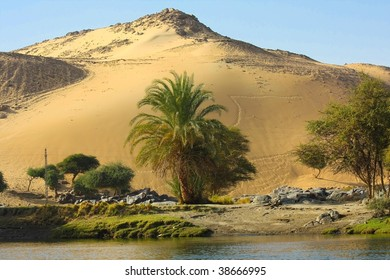 a high sand dune near Assuan, Egypt with some palm trees and the blue sky