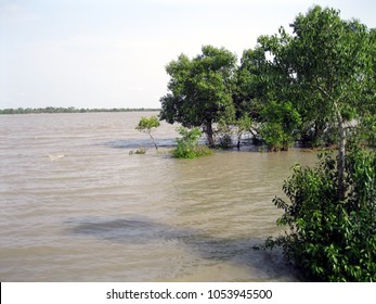 high tide in the area of the world's largest mangrove forest Sundarbans. One third of trees are gone under salty water in this time.