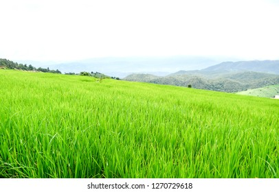 High view paddy rice green field with background wooden hut, mountain and white cloud sky,beautiful nature scene in asia , agriculture and ecotouritsm concept.