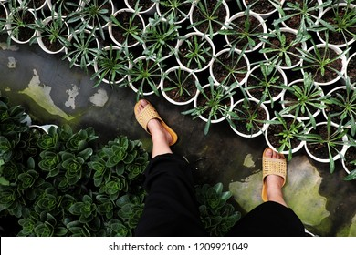 High view scene with woman wear black pants and yellow plastic sandals walk in flower garden, farmer feet on ground, plant grow in green, people farming in springtime