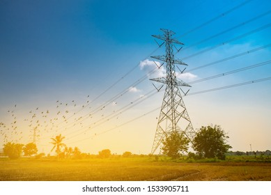 high voltage post ( transmission towers , power tower, electricity pylon, steel lattice tower) with bluesky . Texture high voltage pillar, overhead power line harvested rice field with birds flying,