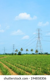 High voltage power lines in corn field with blue sky