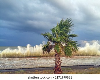 The high waves beat the Black Sea coast and is a palm tree alone in Samsun, Atakum, Turkey.