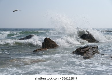 The high waves of the sea, flying gulls.