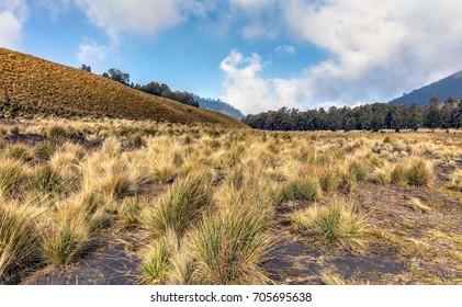 High-altitude plateau called Savannah on track to the volcano Semeru. Bromo Tengger Semeru National Park. Indonesia