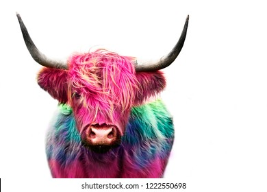 highland cow colorful dyed hair, punk concept