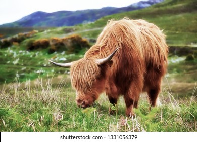 Highland cow in the Scottish Highlands