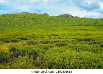Highland flora on mountainside before distant rock. Wonderful rocks on hill in sunny day. Rich vegetation of highlands. Amazing scenic green mountain landscape of majestic nature. Colorful scenery.