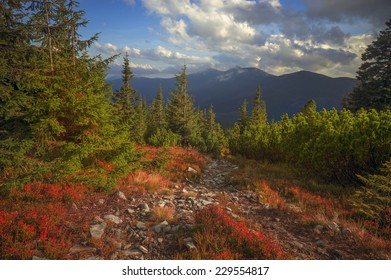 highland vegetation modest summer and unusually beautiful colors blooms in autumn, before cold weather. Blueberries, - bright red, coniferous forest green, orange buk- mountains sinie- fantastic charm