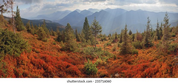 highland vegetation modest summer and unusually beautiful colors blooms in autumn, before cold weather. Blueberries bright red, coniferous forest green, orange buk- mountains sinie- fantastic charm.