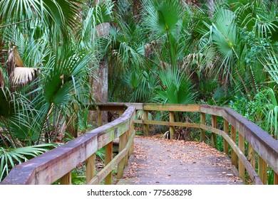 Highlands Hammock State Park in Florida